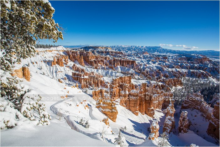 snow covered bryce canyon