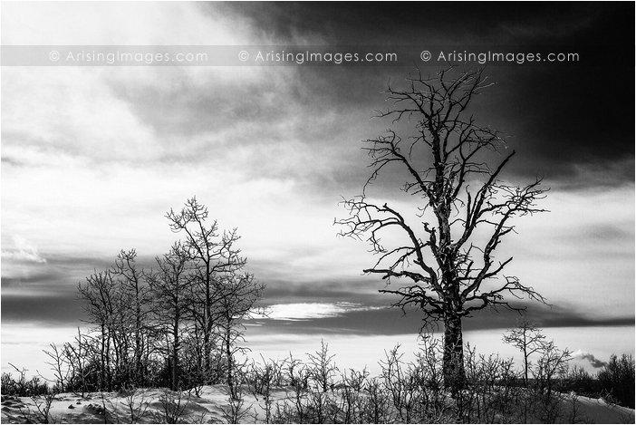 black and white tree photo