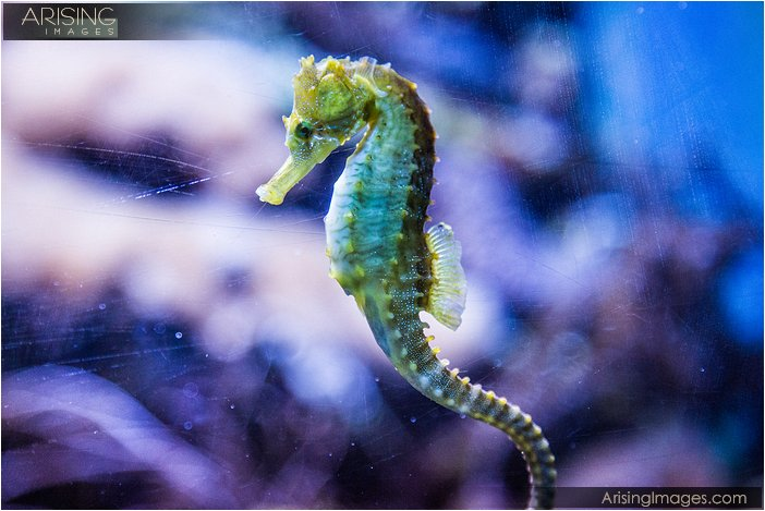 shedd aquarium 2013